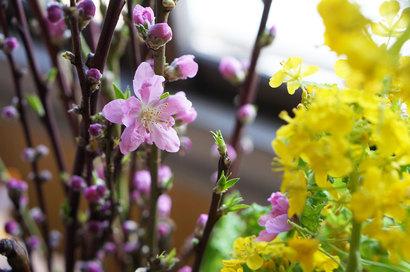おひなさまの桃の花