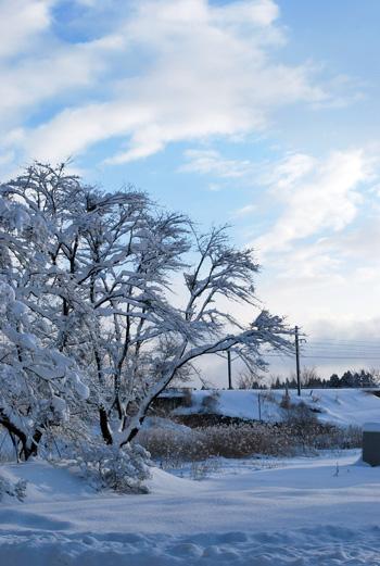 あけましておめでとうございます!秋田県大仙市・雪景色がとても好きです^^