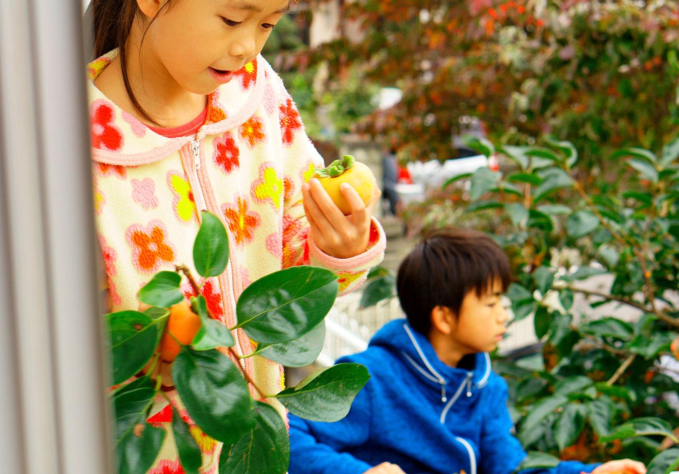 柿もぎの子ども