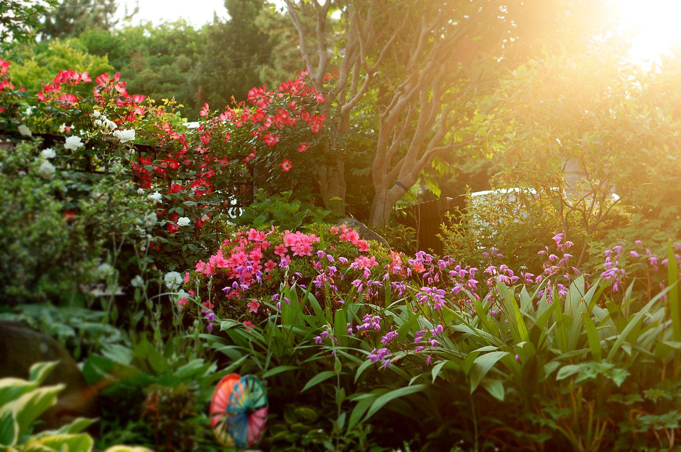 かばんねこの庭