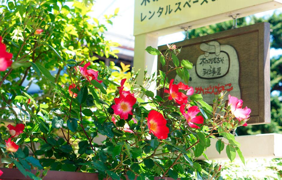 庭のバラとかばんねこの看板